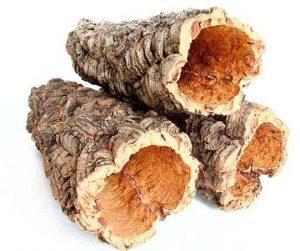 ecore-chene-liege-arbre